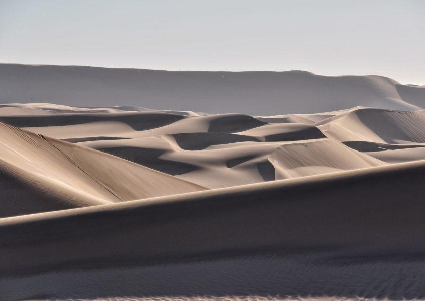 Die Wüste lebt!