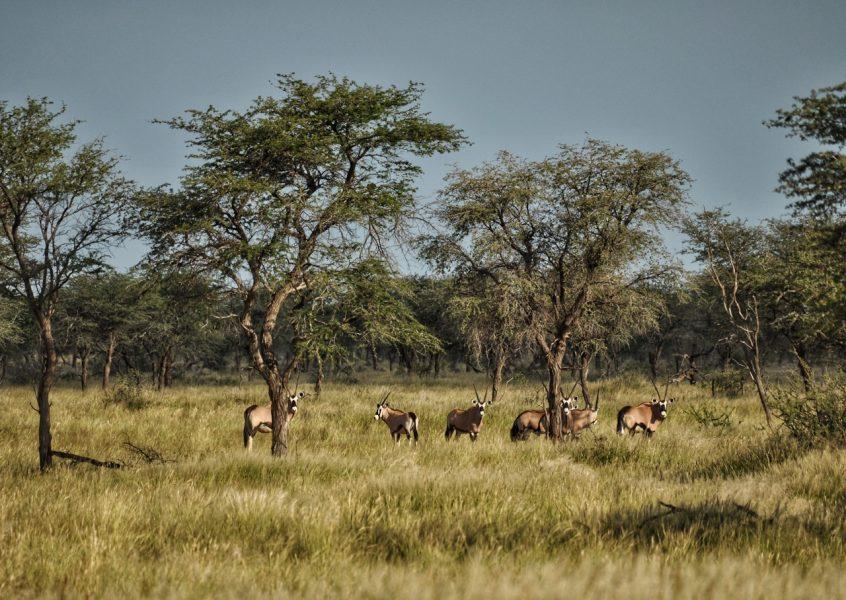 Willkommen in Namibia!